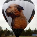 Balloon s/n 1447