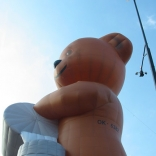 bear_07